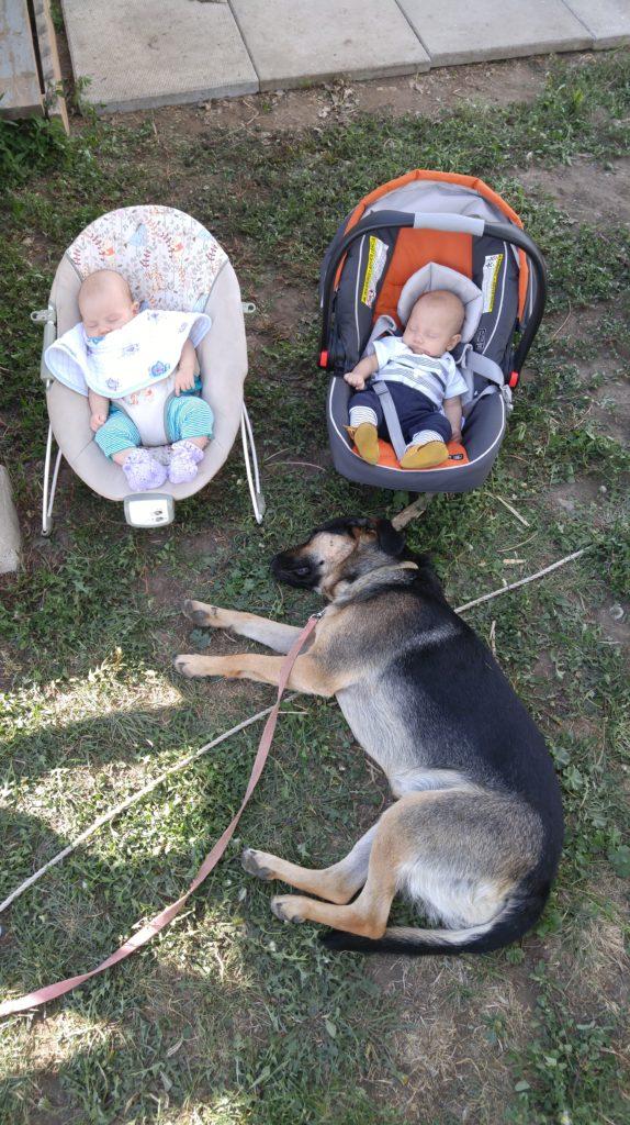 Luna sleeping in front of babies in Drumheller
