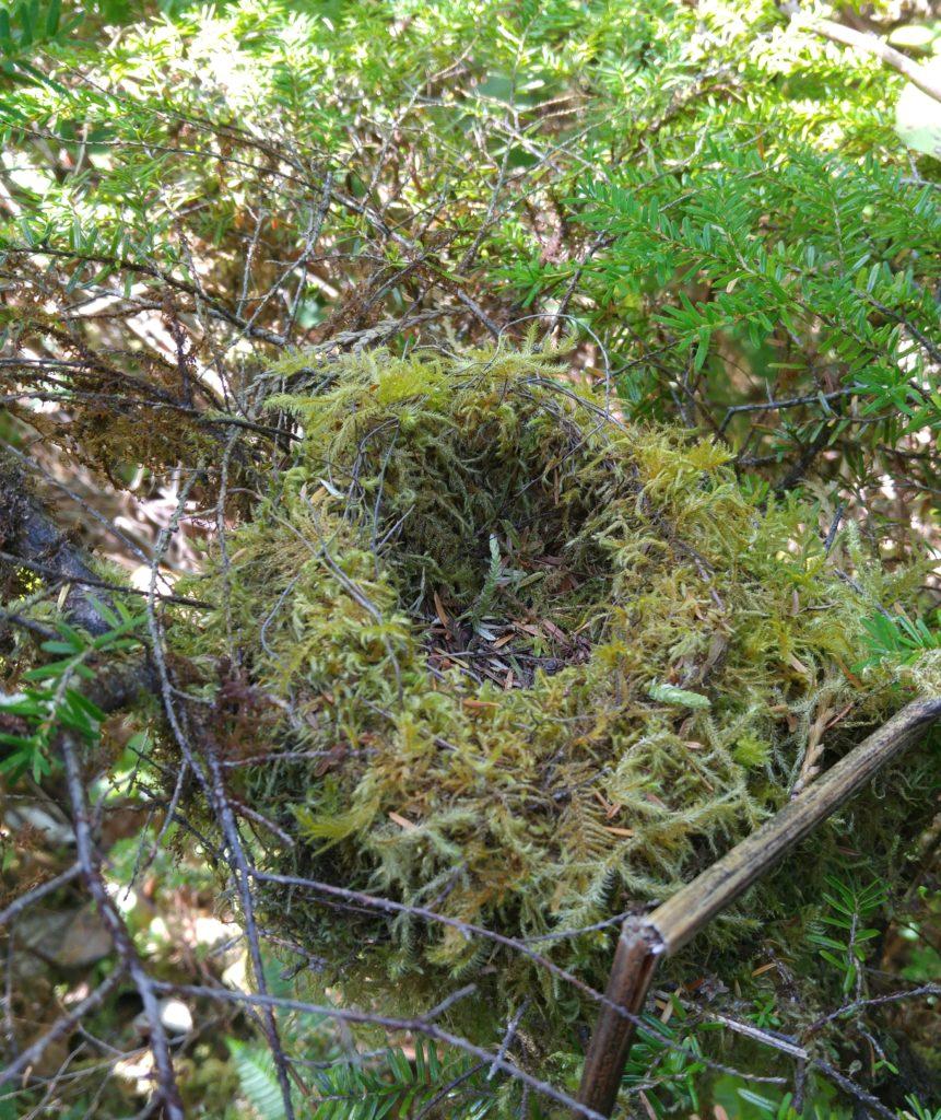 Moss bird's nest
